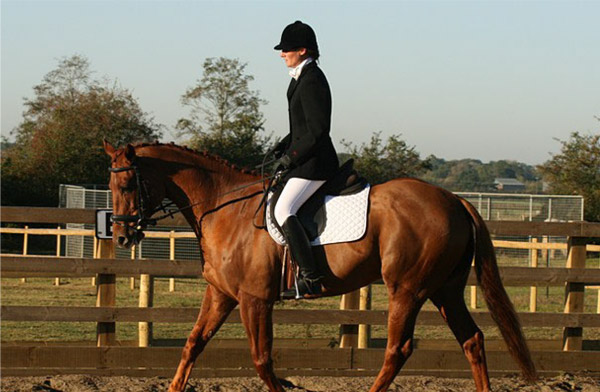 Welcome to Heather Jones Dressage
